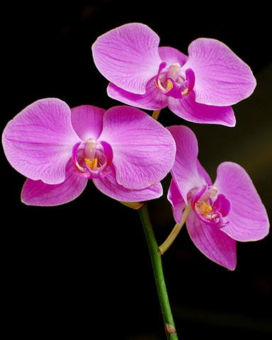 Orchids and Greens for the Restoration of Ecological Balance